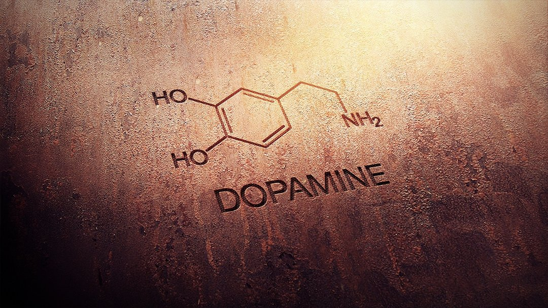 dopamin sistemi